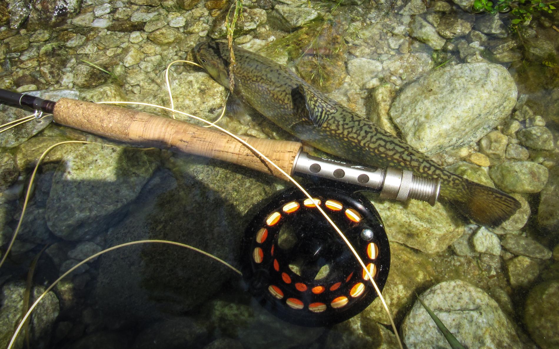 Welche Fliegenrute für Anfänger Fliegenfischen Lernen Blog